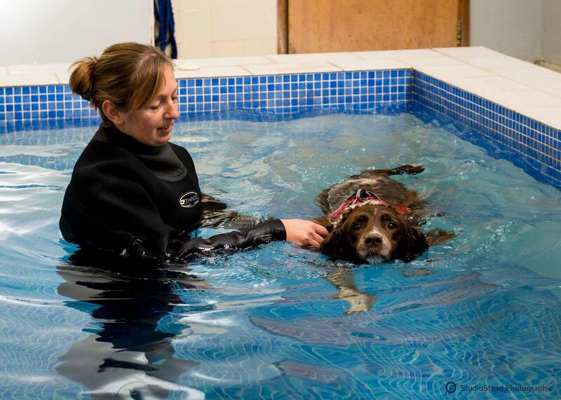 dog-physiotherapy-dorset