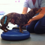 dog-hydrotherapy-dorset