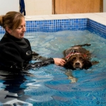 dog-physiotherapy-dorset