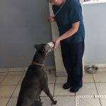 dog-rehabilitation-dorset